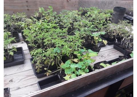 Vegetable plants for sale!